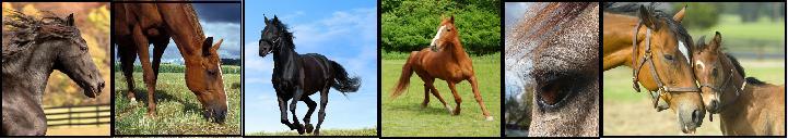 Divisores de caballos. 2318358kxb2w79dts