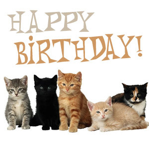 Happy birthday cats