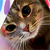 http://sl.glitter-graphics.net/pub/546/546278jfwk085coy.png